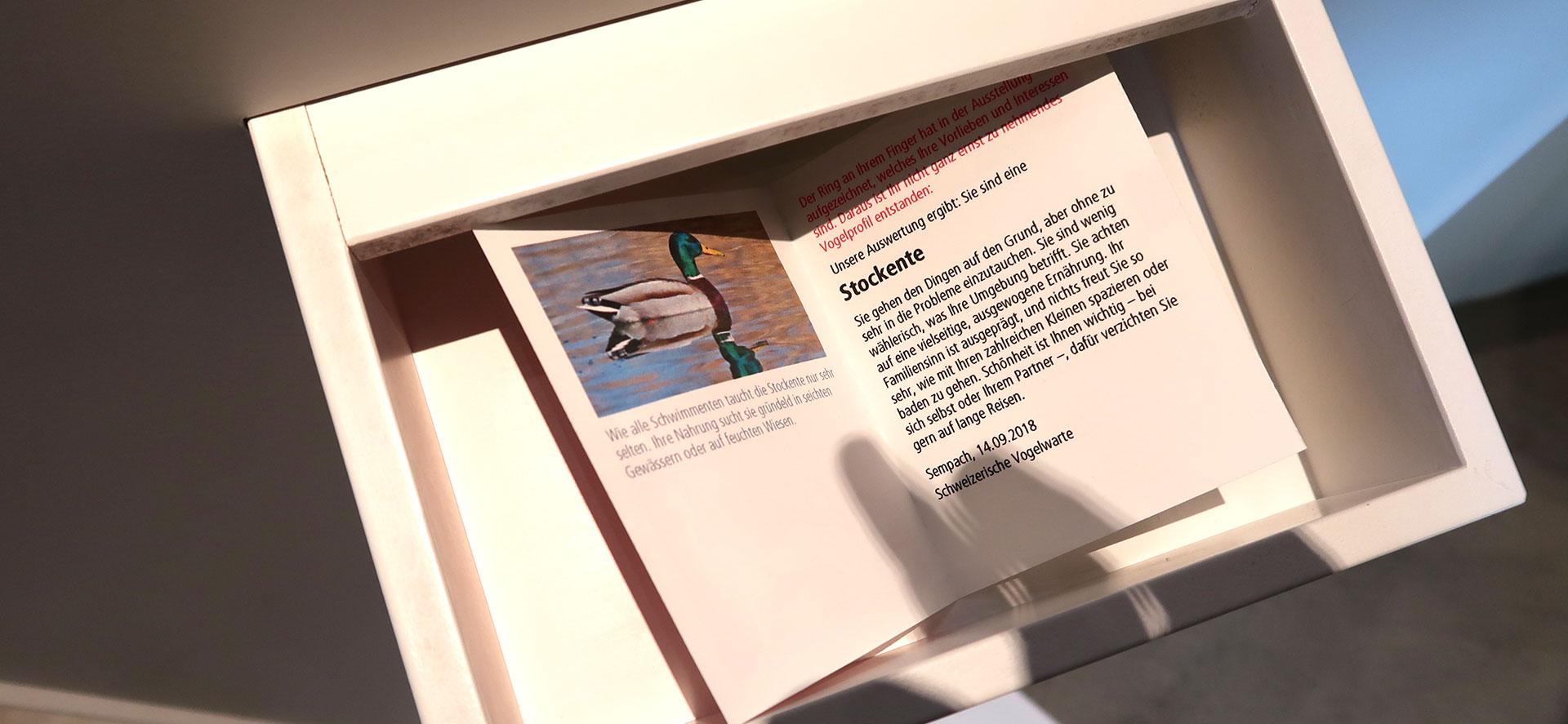 Grafik für Vogelwarte Sempach